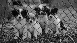 Ett nätstaket är perfekt för att hålla husdjur borta från vägen.